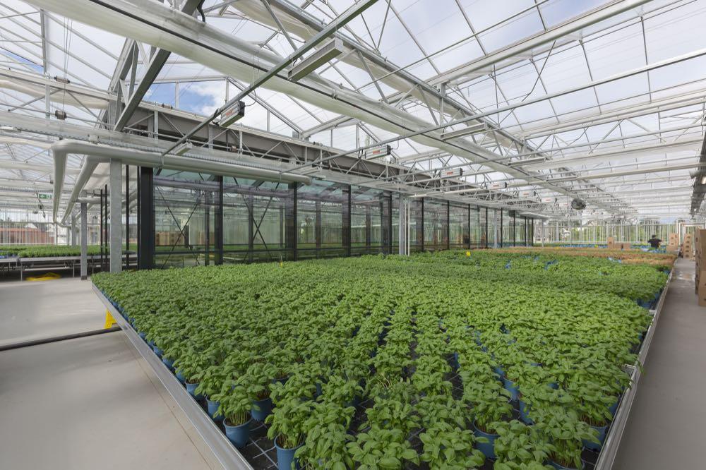 Rewe eröffnet Supermarkt mit Dachfarm
