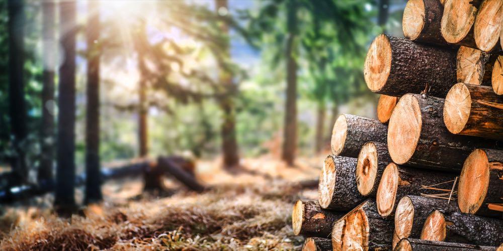 GD Holz: 11 Vorschläge zur Lösung der Holzkrise