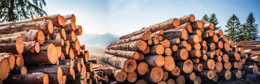 Wirtschaftsminister will Holzengpässe beheben