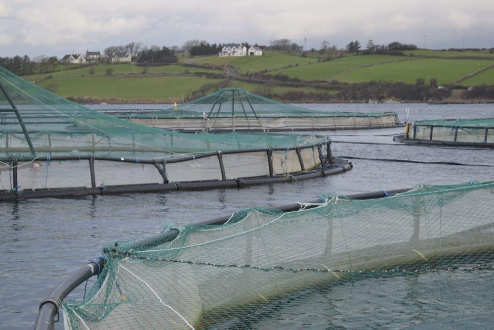 Irland: Mowi will Lachsproduktion voranbringen