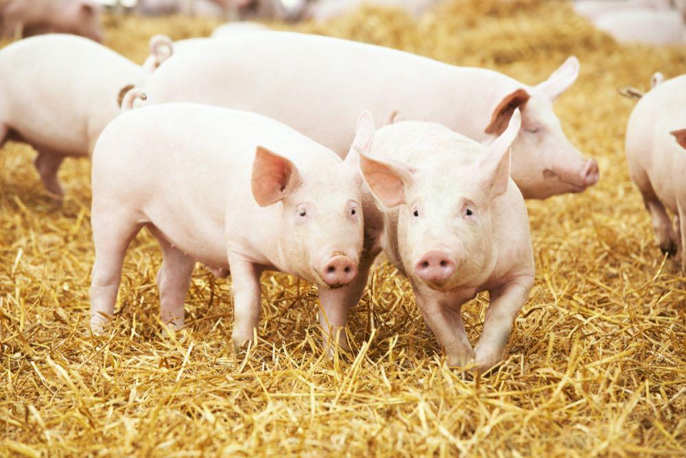 Kaufland: Wurstwaren von Strohschweinen