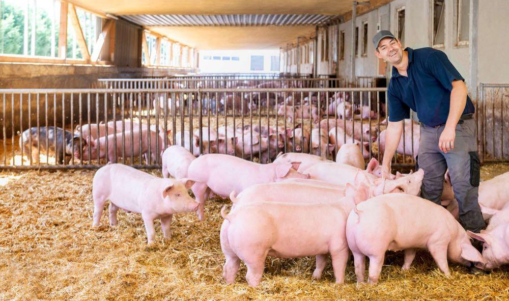 Kaufland: Fünf Jahre Qualitätsfleischprogramm