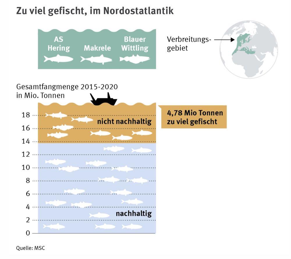 Fischerei-Verhandlungen: MSC fordert Nachhaltigkeit im Nordostatlantik
